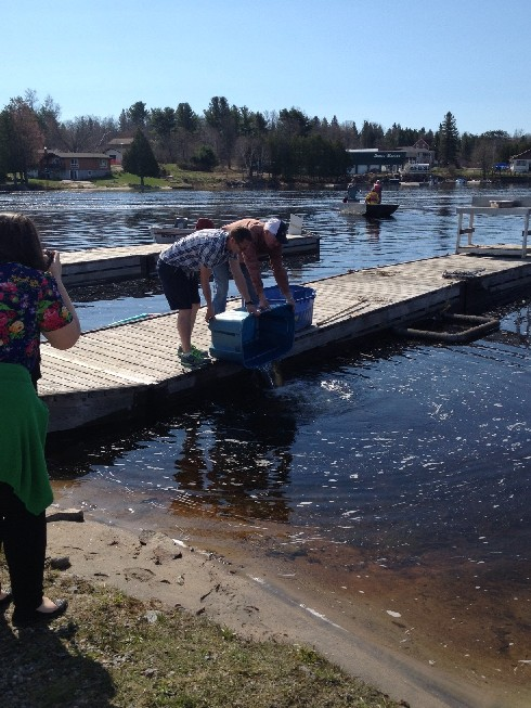 """Students """"launch"""" the fry that hatched in their hatchery into Magnetawan lake"""